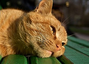 Жители города в США в 15-й раз избрали кота мэром