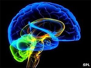 Мозг человека хранит вечную молодость