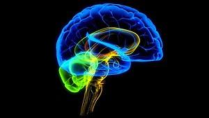 Ученые доказали бесполезность тестов на IQ