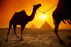 Туроператоры скинутся, чтобы вернуть россиян в Египет