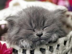Британские ученые изучили ночную жизнь кошек
