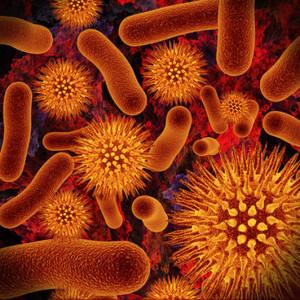 Корейские учёные создали бактерии, производящие бензин