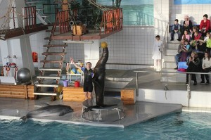 В дельфинарии Челнов появились новые артисты