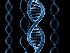 Ученые открыли новый секретный код ДНК человека