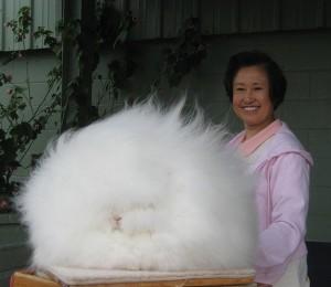 Длина шерсти кролика более 25 сантиметров.