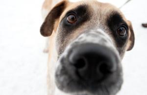 Удивительные ответы на 10 вопросов о вашей собаке